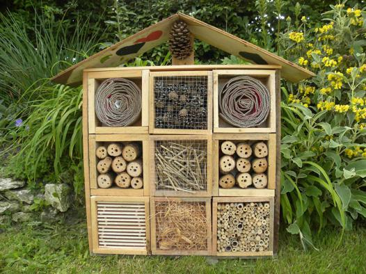 cabane insecte