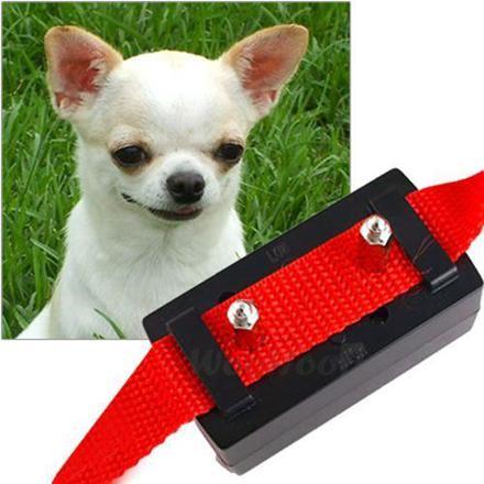 collier anti aboiement petit chien efficace