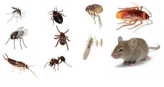 comment tuer les insectes dans la maison