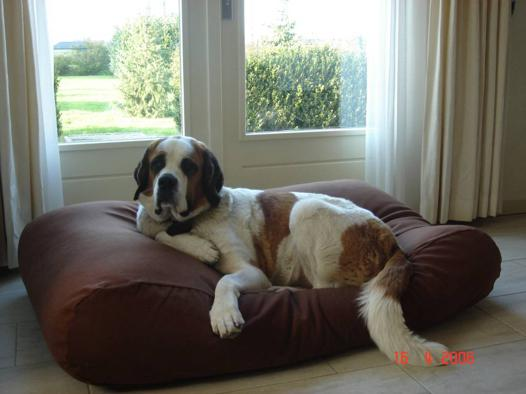 lit grand chien
