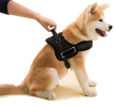 meilleur harnais pour chien