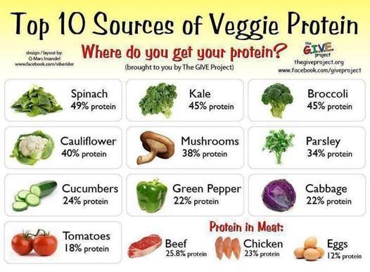 source de proteine végétale